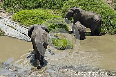 Elephant feeding at riverbank
