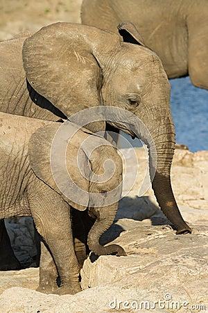Free Elephant Friends Royalty Free Stock Photos - 22430978
