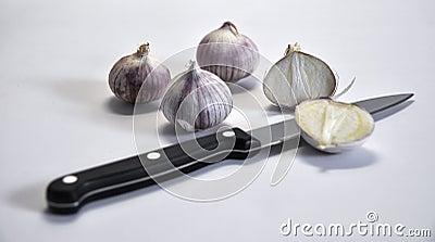Elephant Garlic on white