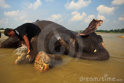 Elephant gets a bath Editorial Stock Photo