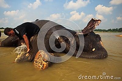 Elephant gets a bath Editorial Stock Photo