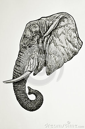 Elephant Head Side View Stock Photos - Image: 36948433
