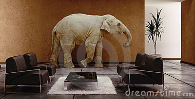 Elephant indoor