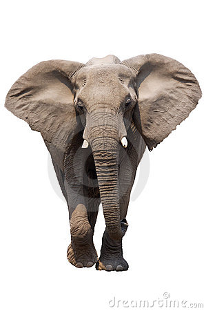 Free Elephant Isolated Stock Image - 12229701