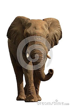 Free Elephant Isolated On White 1 Stock Photo - 2318430