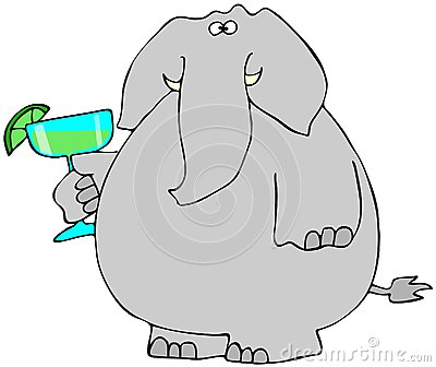 Elephant with a Margarita