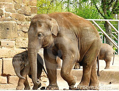 Elephant, mother and child.