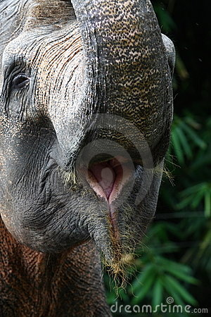 Free Elephant Mouth Stock Image - 14737141