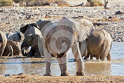 Elephant near waterhole