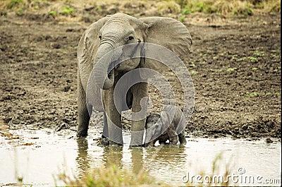Elephant and Newborn