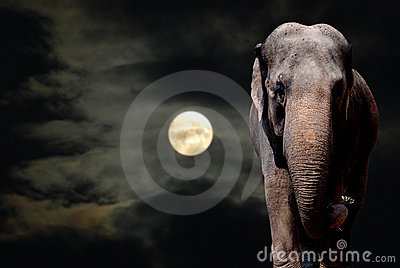 Elephant in Night