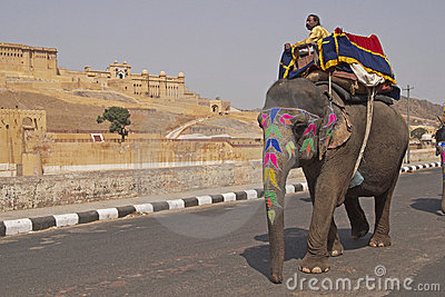 Elephant Passing Amber Fort Editorial Stock Photo