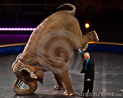 Elephant Perfomance at Circus Editorial Stock Photo
