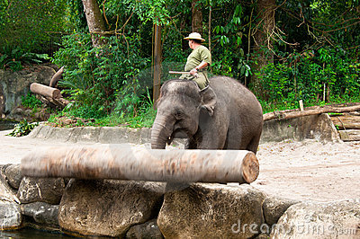 Elephant Pushing Log Editorial Image