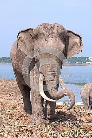 Elephant rest