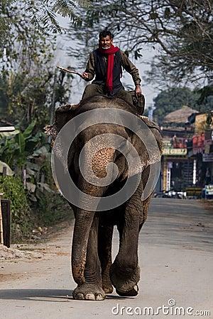 Elephant ride   Editorial Photo