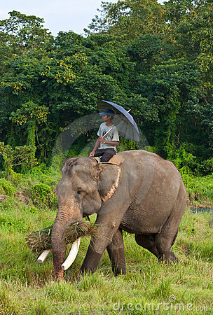 Elephant with Rider Editorial Photo