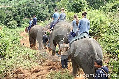 Elephant riding Editorial Stock Image