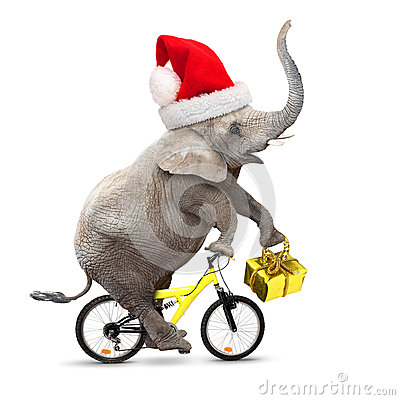 Free Elephant S Christmas. Stock Photo - 44989360