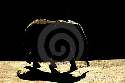 Elephant shadow