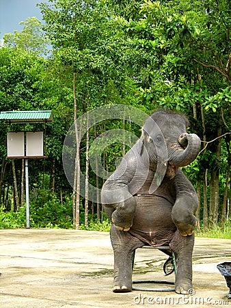 Free Elephant Show Royalty Free Stock Images - 45469