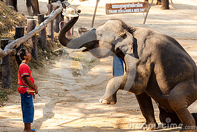 Elephant show put hat to his mahout head Editorial Stock Photo
