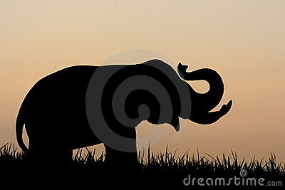 Elephant Silhouette Stock Photography - Image: 17176312
