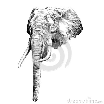 Elephant sketch graphics vector Vector Illustration