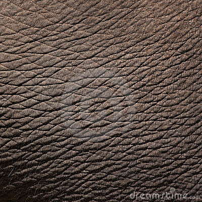 Free Elephant Skin Royalty Free Stock Photography - 20378737