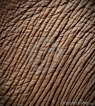 Free Elephant Skin Royalty Free Stock Photos - 21670698