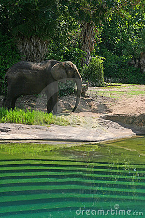 Elephant Stands by Water