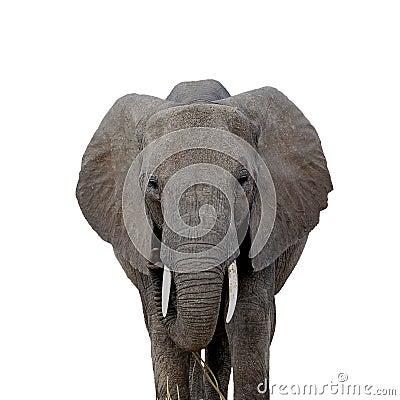Free Elephant Stare Stock Image - 4602571