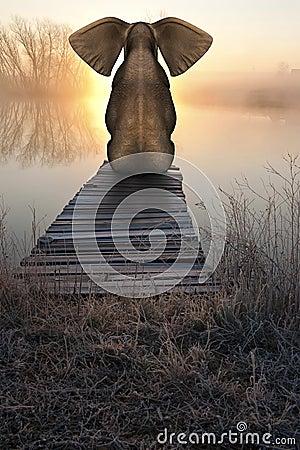 Free Elephant Sunrise Sunset Peaceful Landscape Royalty Free Stock Photo - 45892255