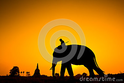 Stock image: elephant and sunset with sunset scene