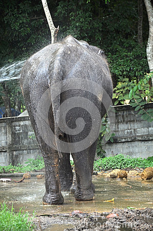 The elephant take a bathe