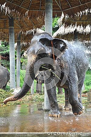 The elephant take a bathe