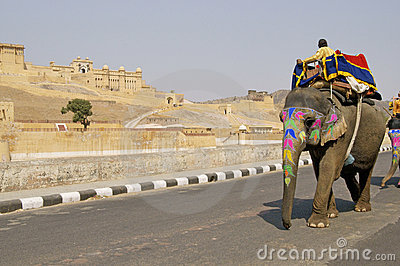 Elephant Taxi Editorial Stock Image