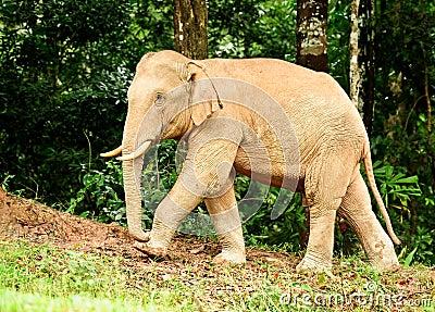Elephant Thailand