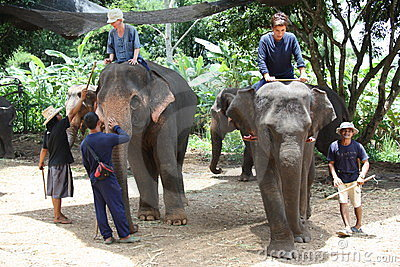 Elephant training and riding Editorial Stock Photo
