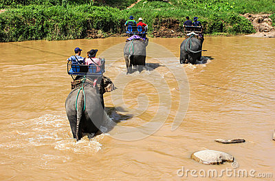 Elephant trekking Editorial Photo