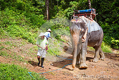 Elephant trekking in the jungle of Thailand Editorial Image
