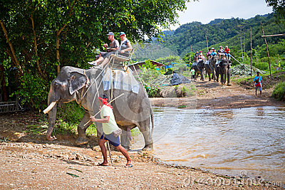 Elephant trekking in Khao Sok National Park Editorial Stock Image