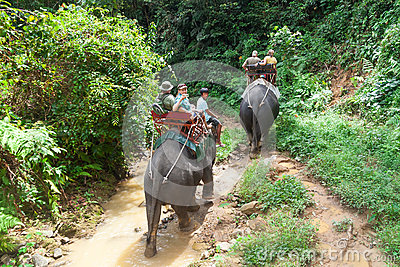 Elephant trekking in Khao Sok National Park Editorial Stock Photo