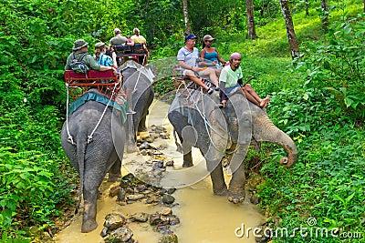 Elephant trekking in Khao Sok National Park Editorial Image