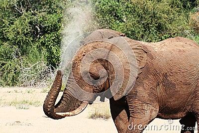 Elephant Washing