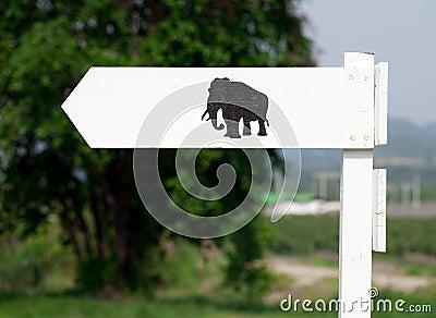 Elephant way