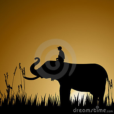 Elephant, wildlife