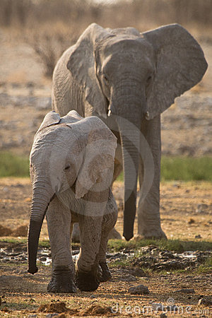 Free Elephant With Baby Royalty Free Stock Photography - 17926707