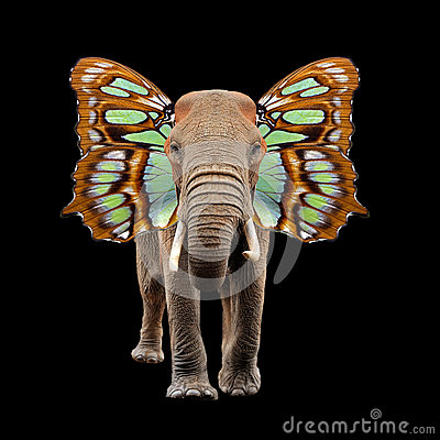 Free Elephant With Butterfly Wings Stock Image - 83768521