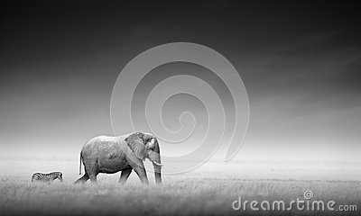 Elephant with zebra (Artistic processing)